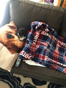 dog sleeping on a couch under a blanket